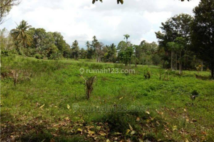 BUB ! Kavling Luas di Minahasa Utara, Sulawesi Utara