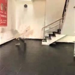 Dijual Ruko 2 lantai di jalur aktif di Regia Graha Raya, OF6026