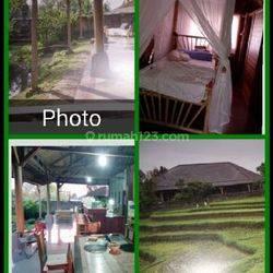 Rmh villa 750 m2 Penebel Tabanan hrg 1,1 mly