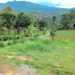Tanah Murah Di Rancaekek Bandung Jawa Barat
