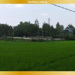 Tanah Murah dan Besar di Jalan Budi Bandung