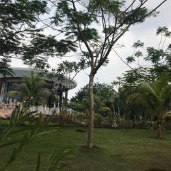 Demaja @Depark Bsd City - Your Green Sanctuary Promo Disc & Cicilan Pjg