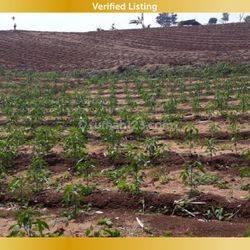Tanah di sayap Alfathu Ciputih lokasi strategis cocok untuk perumahan perkebunan dan peternakan
