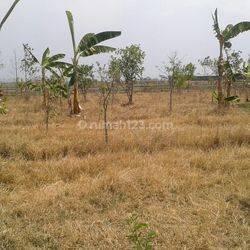 Tanah Matang Di Rancaekek Kabupaten Bandung Jawa Barat