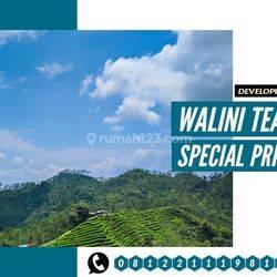Tanah Kavling Bandung Barat View perkebunan Teh dan Gunung Burangrang