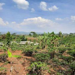 Hanya 1 Jtaan/m2: Tanah Kapling Area Kota Raya Walini Bandung
