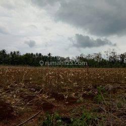 Tanah Di Lampung Jl Raya Ir. Sutami