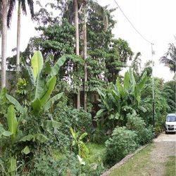 Tanah di Jl. Prof Dr. Hamka, Larangan Selatan, Cildeug, Tangerang