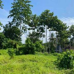 Land For business, villas, hotels, resorts Ubud Bali