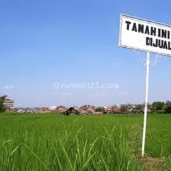 Tanah SHM Jalan Abdul Karim lebar 14,5 LOKASI BAGUS NOL JALAN STRATEGIS