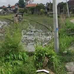 Dijual tanah lokasi keren dan nyaman lahan kuning, lingkungan orang- orang asing