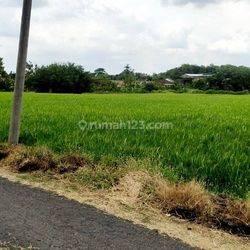Tanah Pertanian Mangku Jalan Aspal