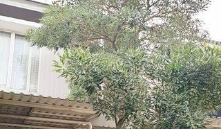 Rumah Siap Huni, Depan Taman Lingkungan Asri di Emerald Bintaro
