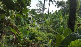 12 ARE LEASEHOLD LAND IN TANDEG - BERAWA