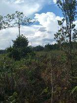 Tanah Kavling Perkebunan Palangkaraya Kalimantan Tengah