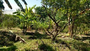 Tanah:1800m2 super murah siap Bangun Di jln pantai Batu Bolong canggu Badung Bali