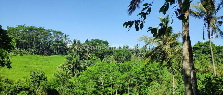 4900 Sqm Leasehold Land With Rice field, Palm trees and River Views just 15 minutes to Ubud center