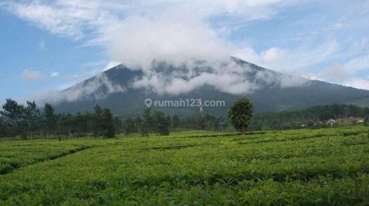 Baru! Rumah Villa di Puncak Bogor Cipanas 20 Menit ke Taman Bunga Nusantara 4