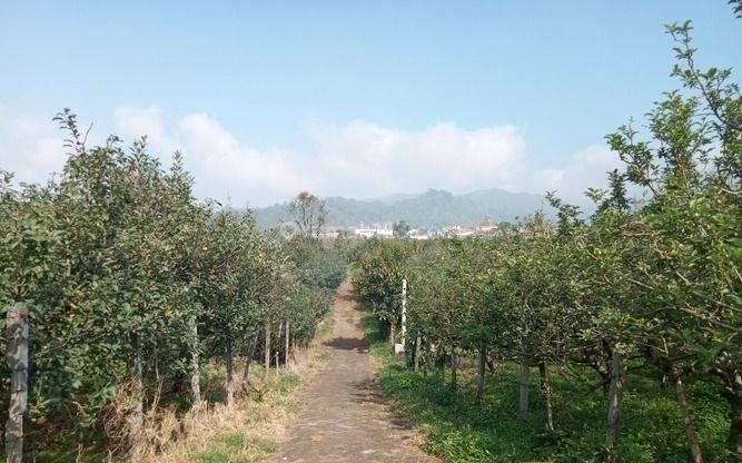 Tanah kebun apel 26,6 ha + 2 Villa di Bumiaji Kota Batu 8